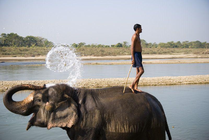 2007-12/avec-sa-trompe-l-elephant-puise-de-l-eau-et-s-arrose-pour-se-nettoyer-d319472dde6e12cdb26e2356ca735f3c67cef8d8.jpg