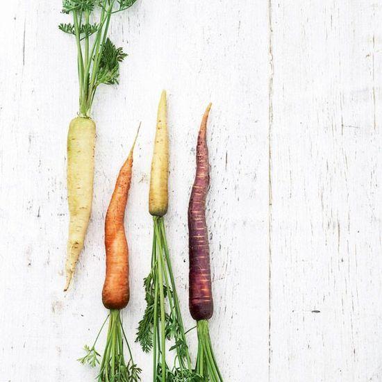 2014-06/recette-la-carotte-et-la-fleur-d-oranger-fine-gelee-et-mousseux-a-la-carotte-coulant-de-yaourt-a-la-fleur-d-oranger-et-voatsiperifery-95a360649d08ff1dc4fc1277e311e140d7a349ba.jpg