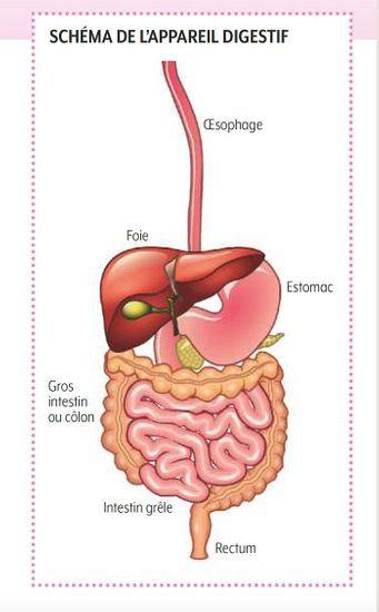 2020-02/schema-appareil-digestif.jpg