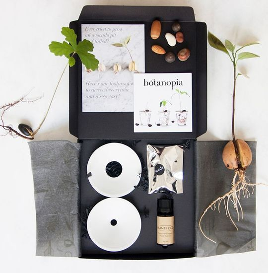 2020-05/coffret-germination-botanopia.jpg