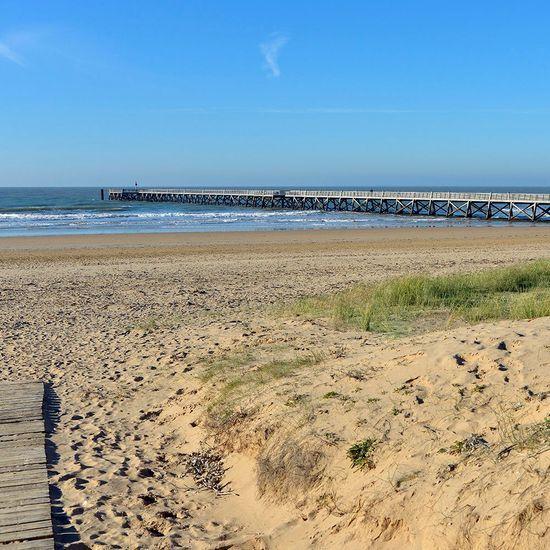 2021-07/plage-saint-jean-de-monts-chien.jpg