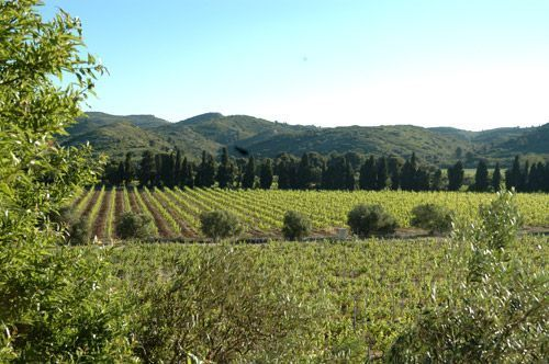Baumanière-vignoble-Affectif