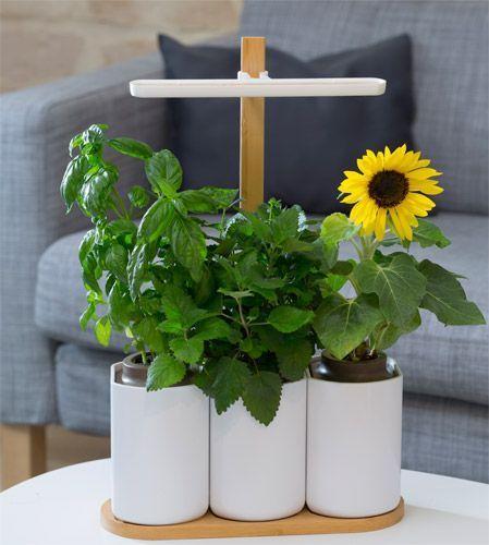 Lilo le jardin autonome d'intérieur de Prêt à pousser.