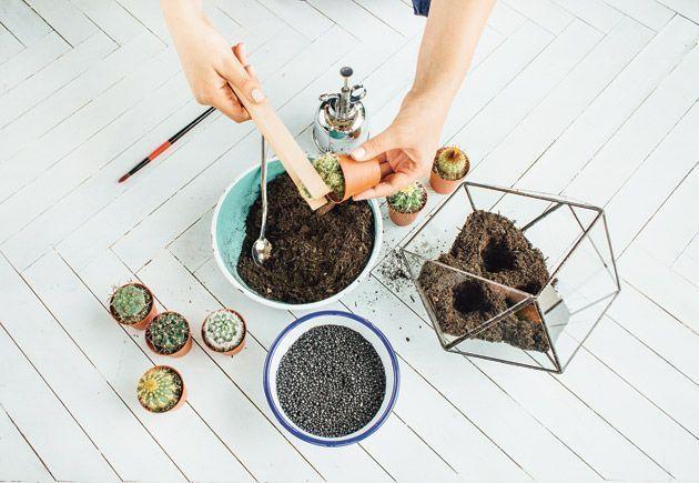 Des plantes retirées de leur pot pour fabriquer un terrarium végétal