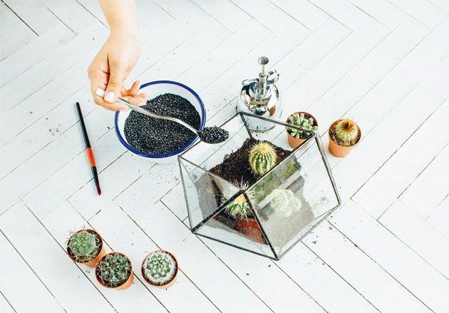 Du gravier aquatique ajouté dans un terrarium végétal