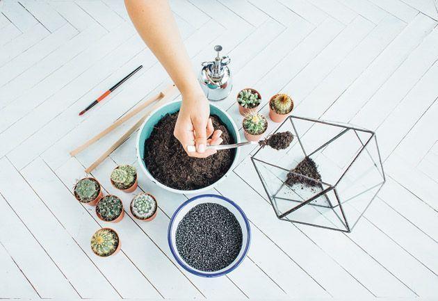 Le versement du terreau dans le terrarium végétal