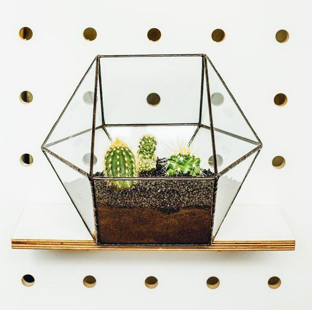 Un terrarium végétal