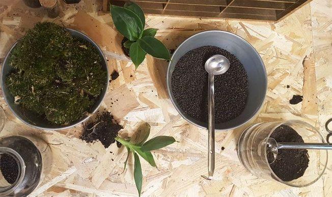 Les éléments pour réaliser un terrarium de plantes maison.
