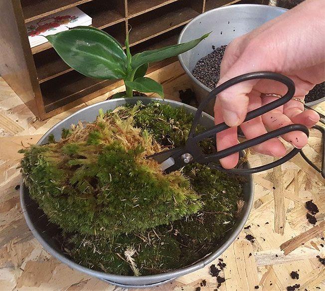 De la mousse végétale à placer dans un terrarium de plantes.