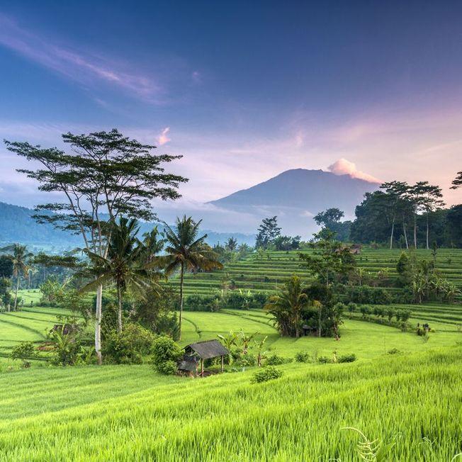 L'Indonésie.