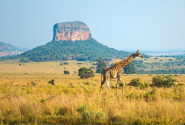 Le parc national Kruger en Afrique du Sud.