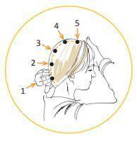 Les points de massage du cuir chevelu.