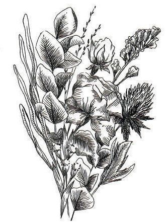 Le dessin de plantes séchées.
