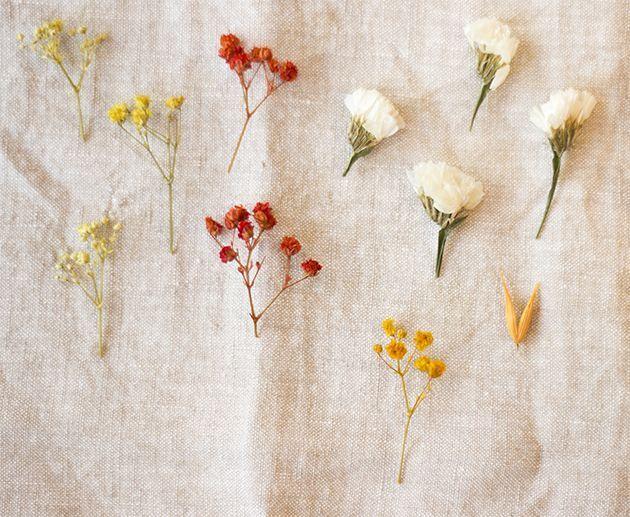 Des fleurs séchées colorées.