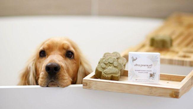 Un shampooing solide pour chien naturel.