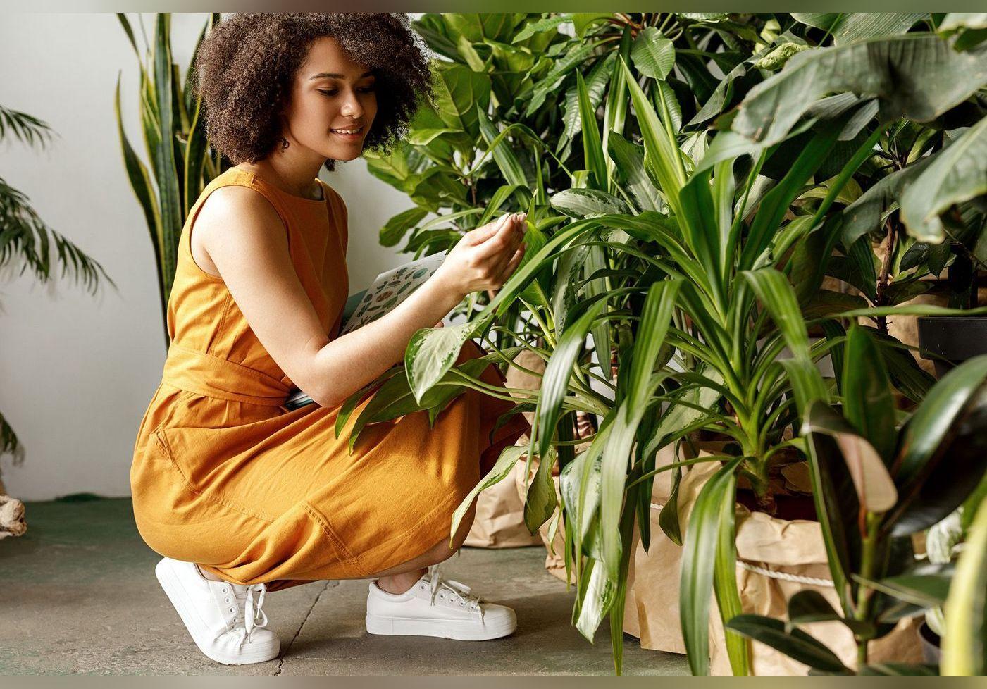 Lidl propose des outils de jardin à petit prix durant tout le mois de mars ! Découvrez les produits du catalogue
