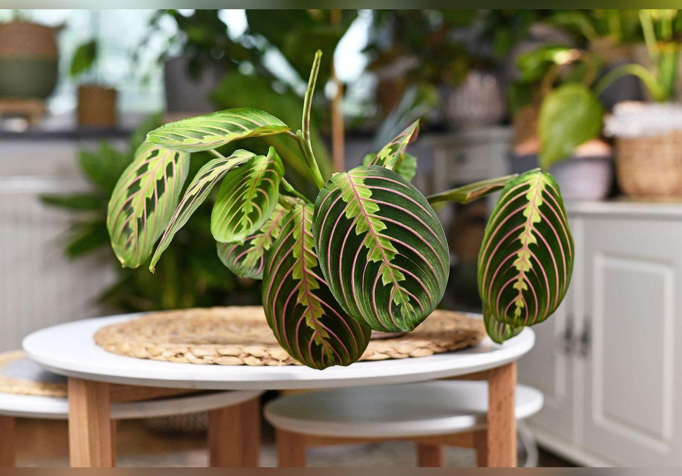 4 plantes d'intérieur qui n'ont (presque) pas besoin de lumière