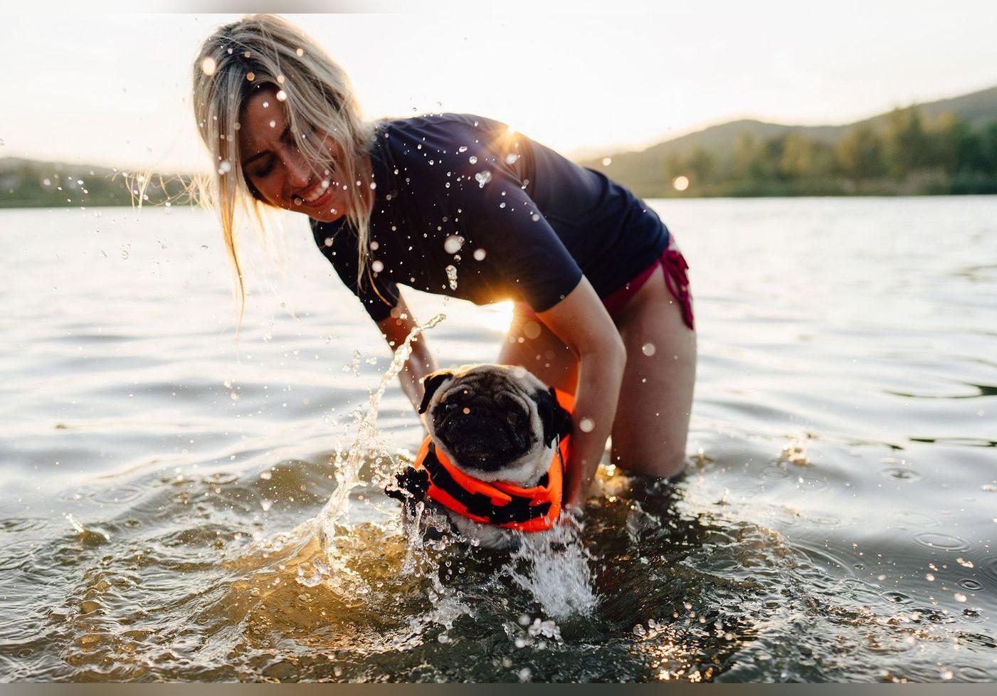 Où partir avec son chien en vacances ? Les 10 villes les plus « dog friendly » de France cet été