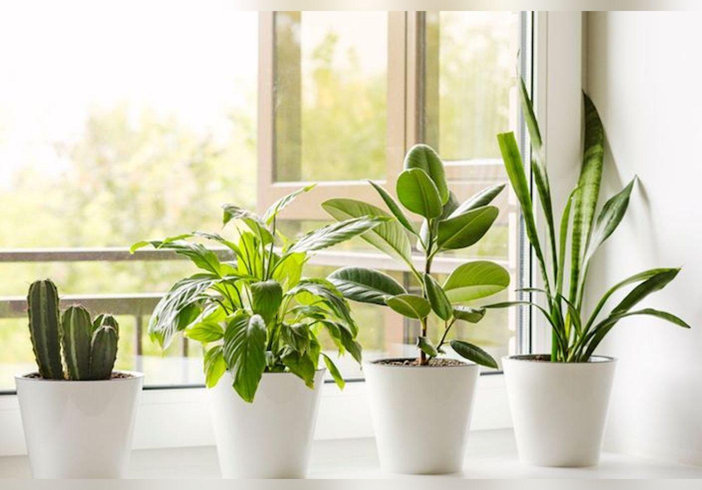 Voici 5 applications pour prendre bien soin de ses plantes !