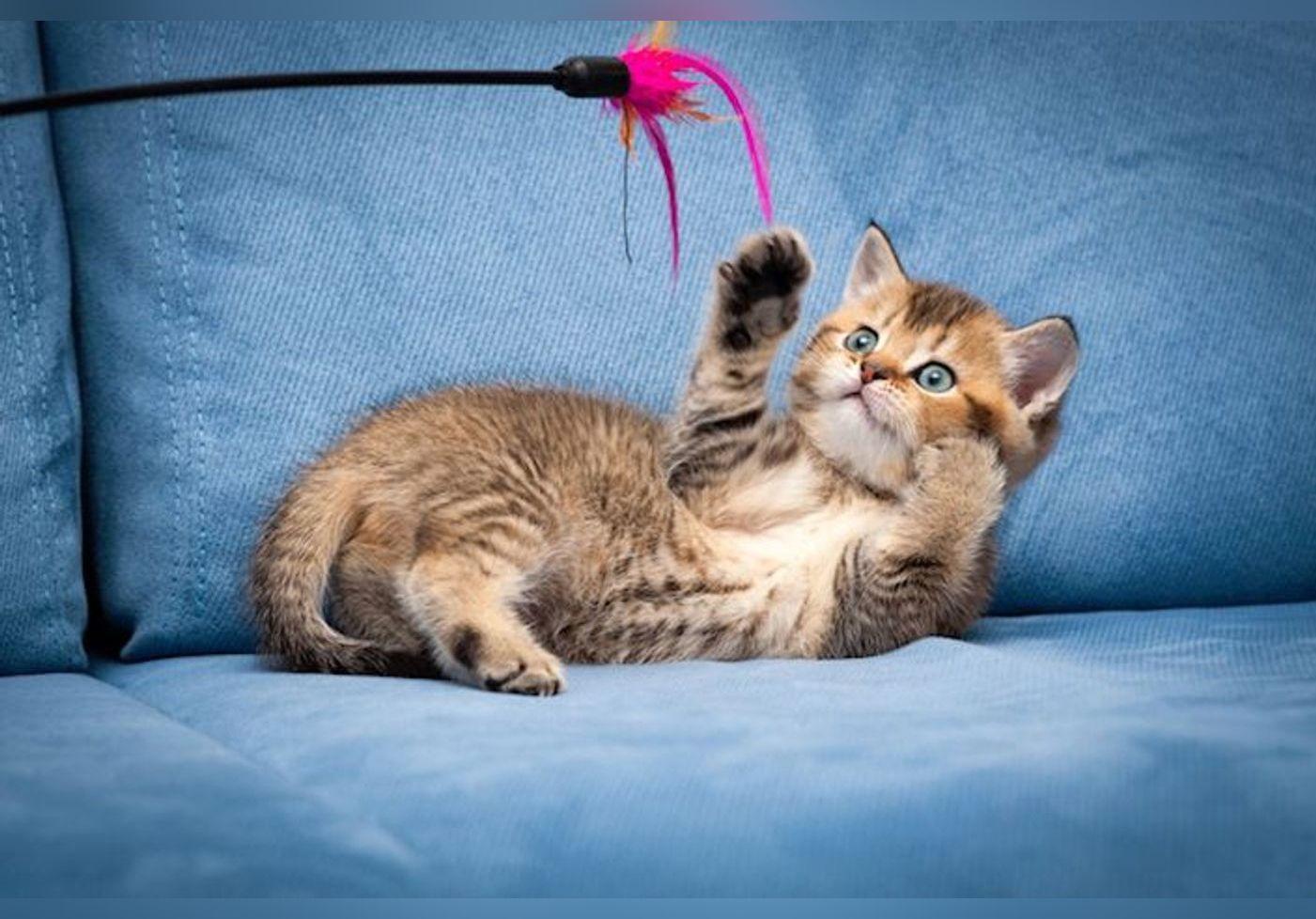 Les jouets que vous devez absolument avoir pour votre chat !