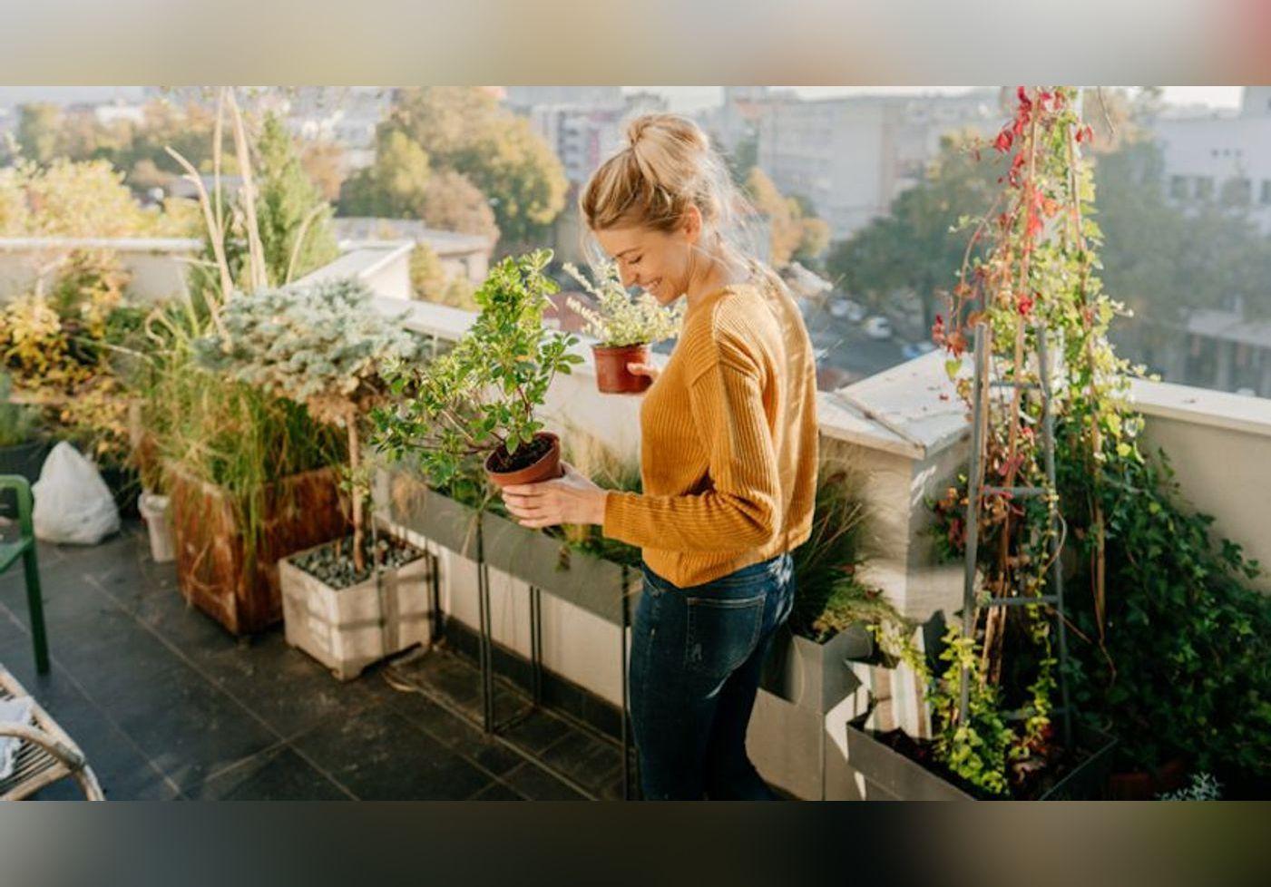 Les meilleures plantes grimpantes pour illuminer votre terrasse !