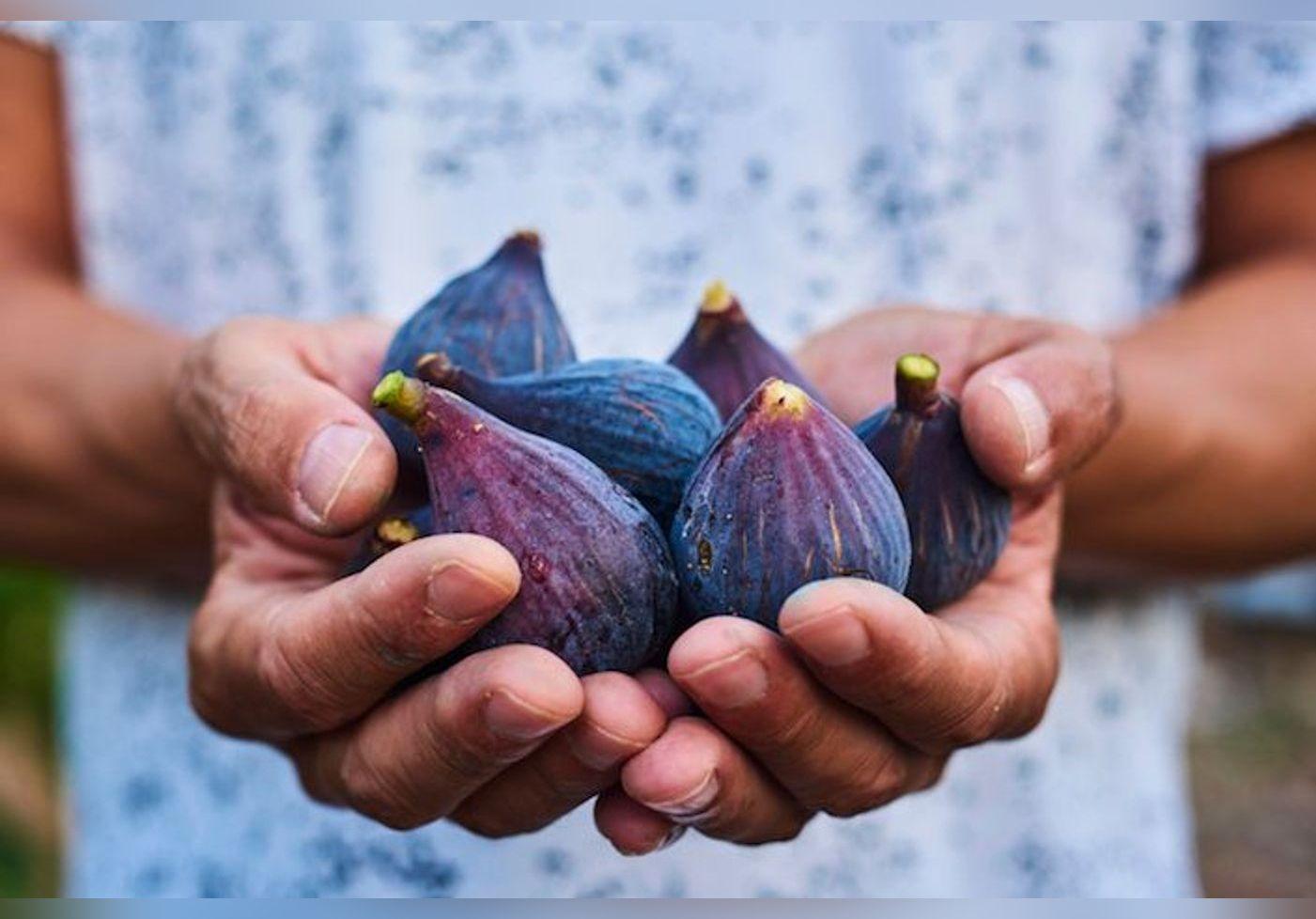 Lorsque l'on déguste une figue, on mange aussi un insecte, mais lequel ?