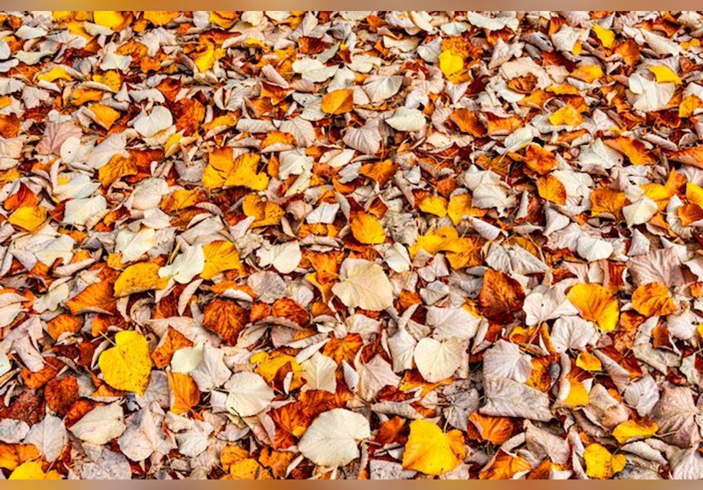 Voici des astuces efficaces pour réutiliser des feuilles mortes de votre jardin !