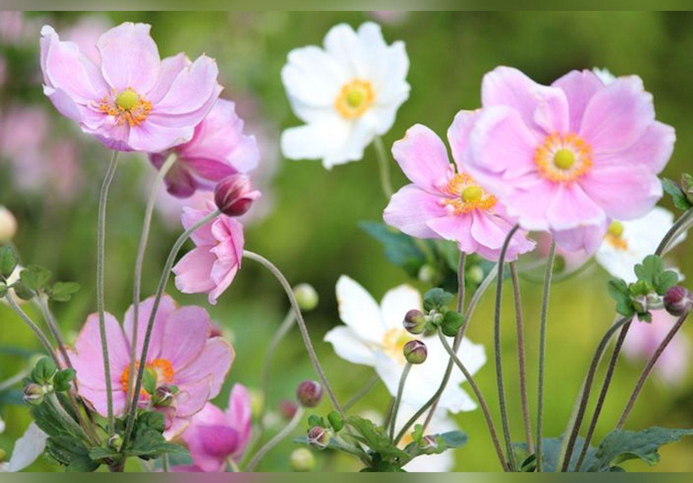 Voici des fleurs d'automne qui vont sublimer et colorer votre jardin !