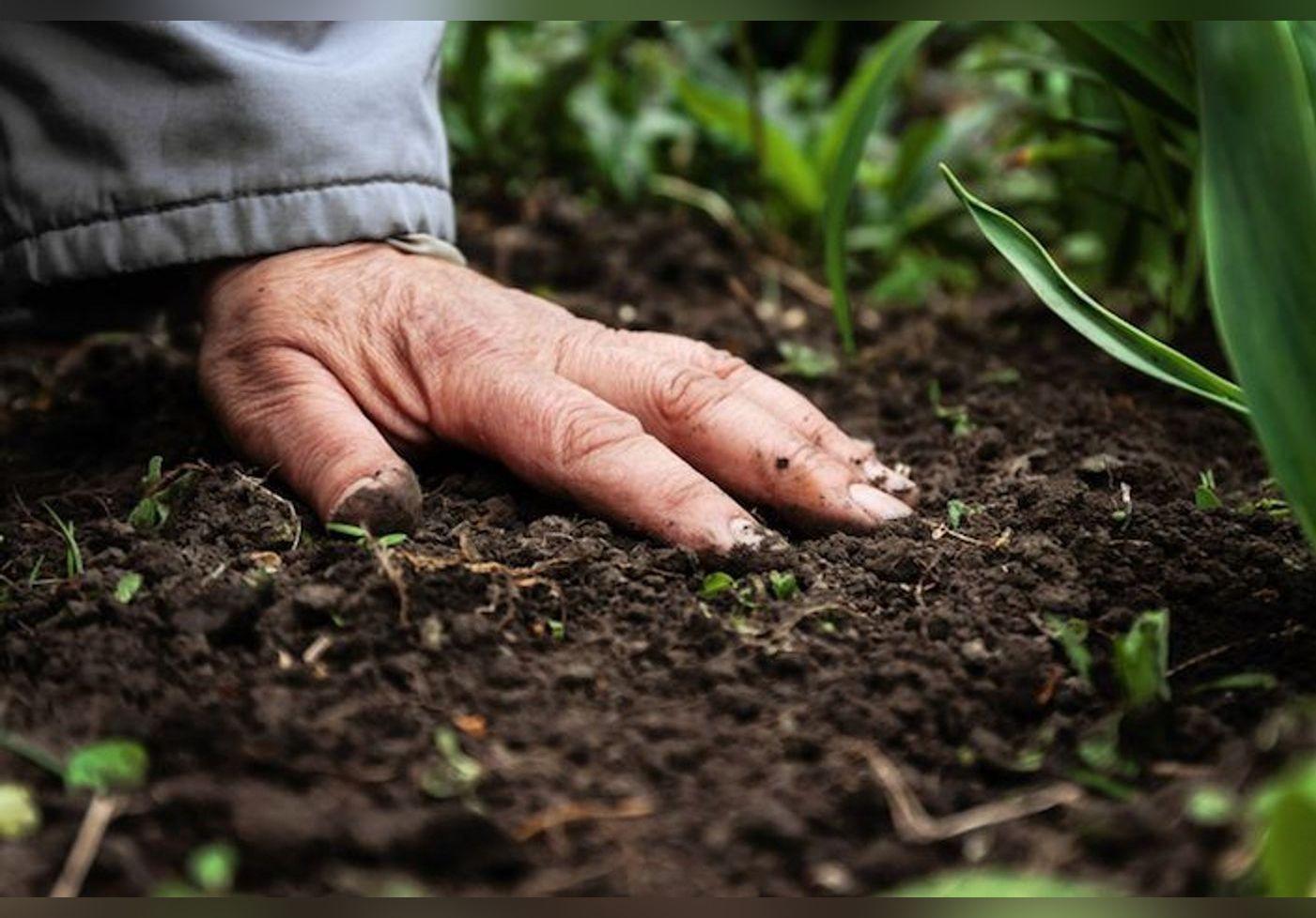 Voici des engrais naturels fait maison pour fertiliser soi-même ses plantations !