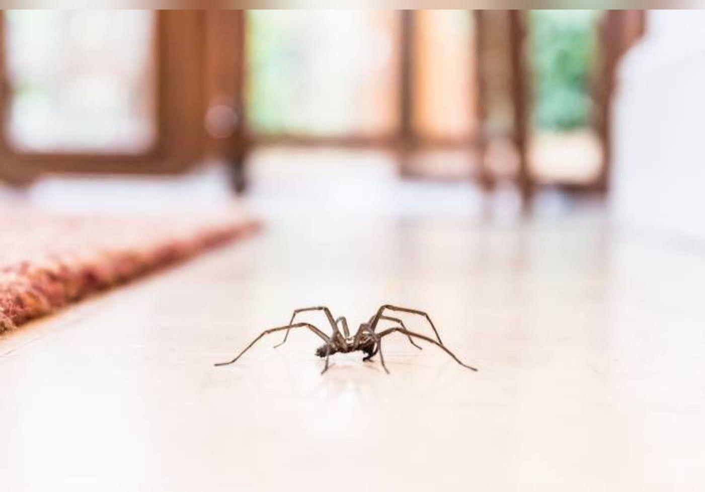 Voici pourquoi il ne faut jamais tuer les araignées de votre maison