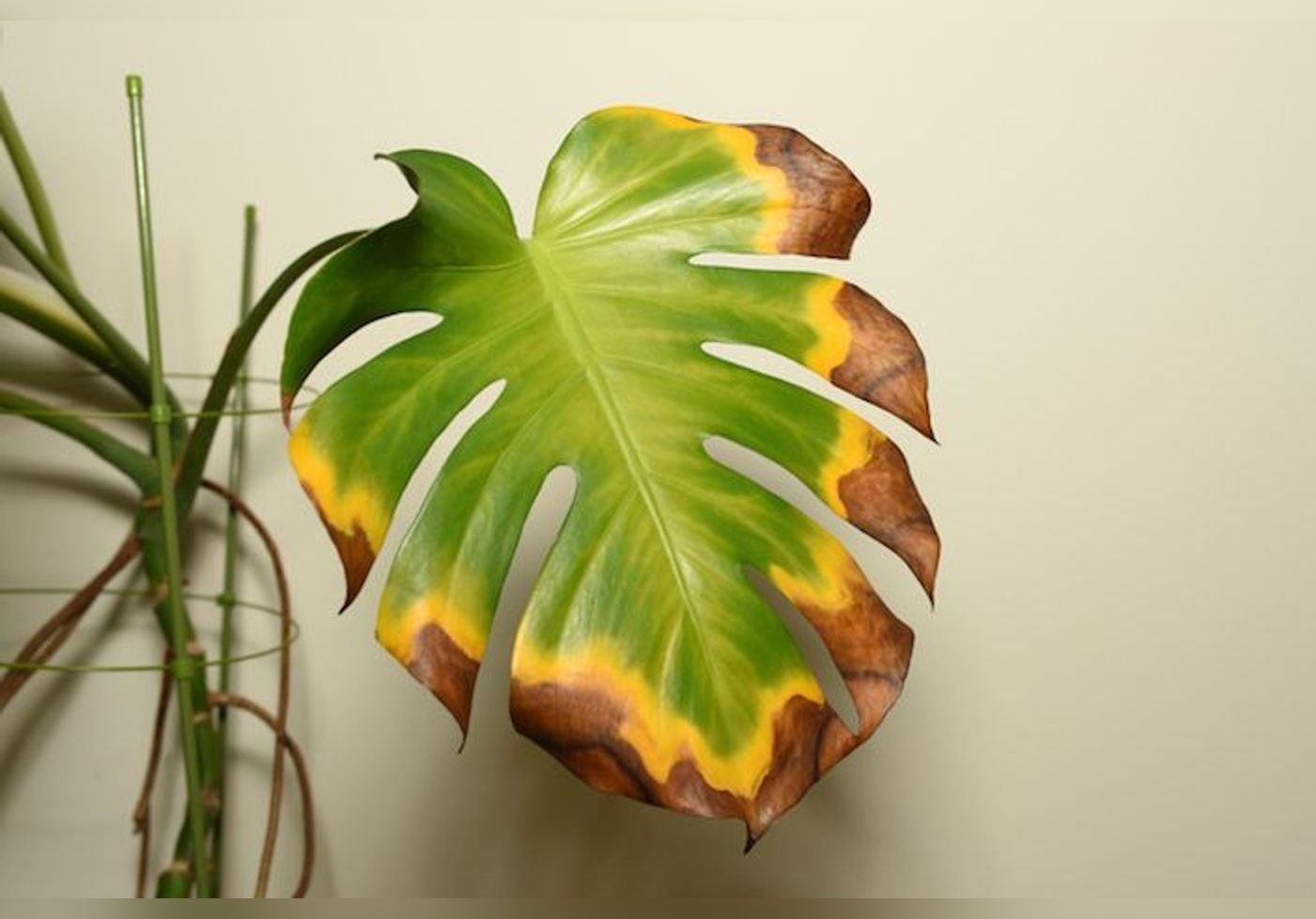 Les feuilles de vos plantes jaunissent ? Des gestes faciles à adopter pour les secourir !