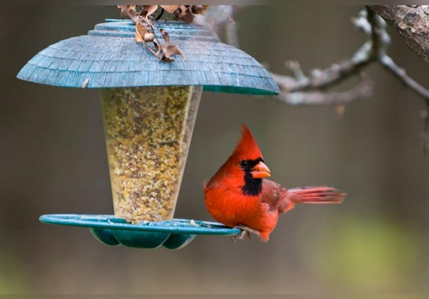 Comment fabriquer une mangeoire pour oiseaux ? Quelques petits tutos faciles et pratiques !