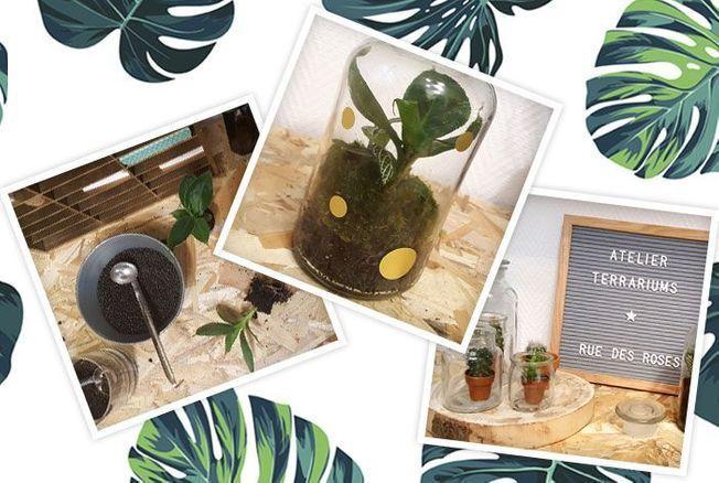 Comment réaliser un terrarium de plantes : le tuto facile