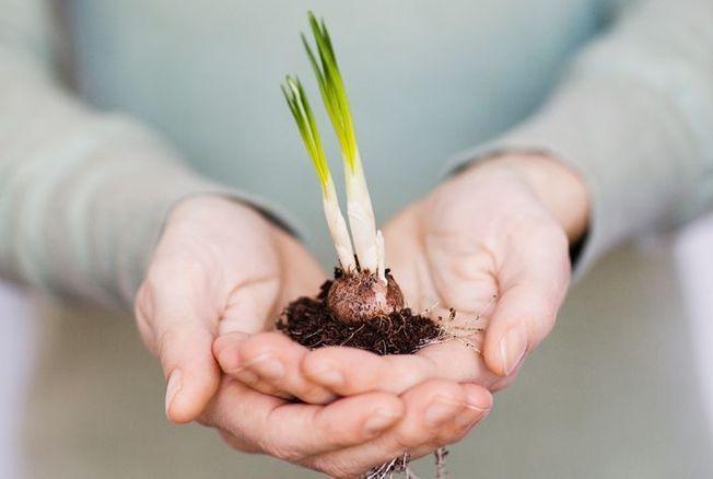 « Regrowing » : l'art de faire repousser ses légumes