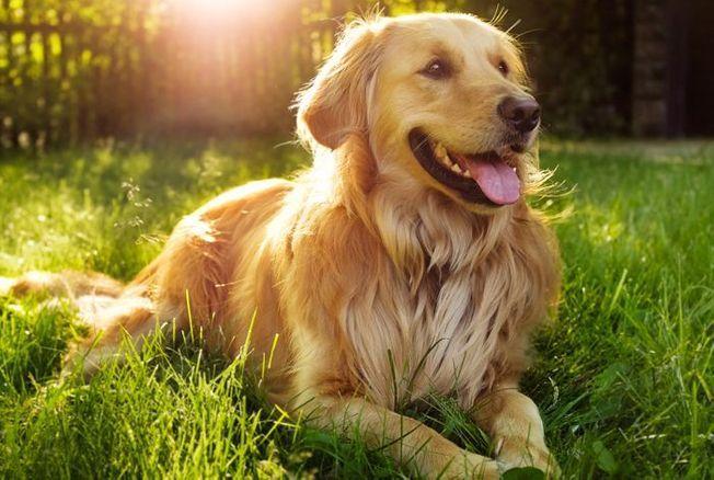 Le top 10 des chiens préférés des Français