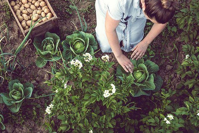 Calendrier du jardinage : comment prendre soin de ses plantes au fil des mois