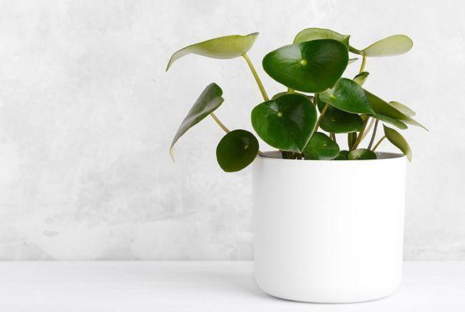 10 plantes d'intérieur faciles à entretenir pour ceux qui n'ont pas la main verte