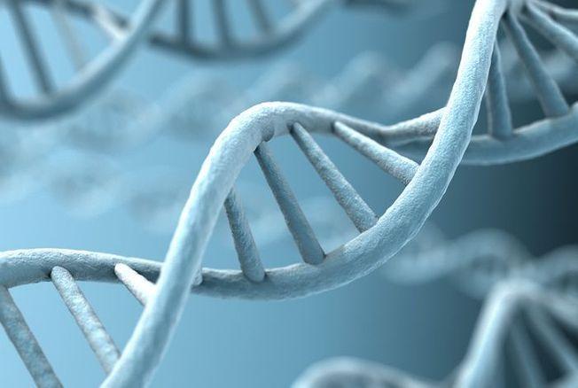Le chromosome Y a disparu