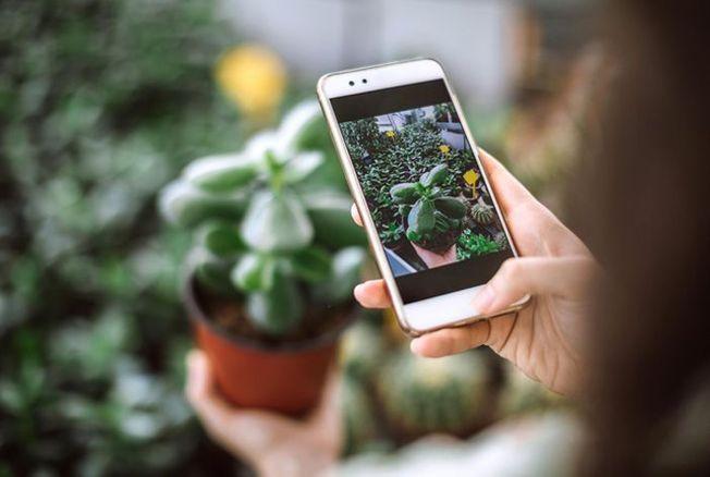 #Greenporn : les plantes, nouvelles stars d'Instagram