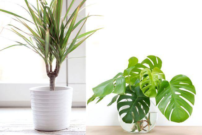 11 plantes qui ne nécessitent (presque) pas d'être arrosées