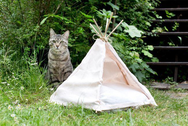 Tipi pour chat maison : voici comment le fabriquer avec du tissu et des baguettes en bois